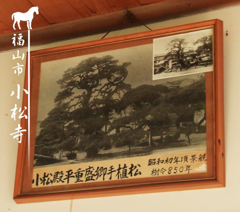 広島県福山市の平重盛お手植えの松