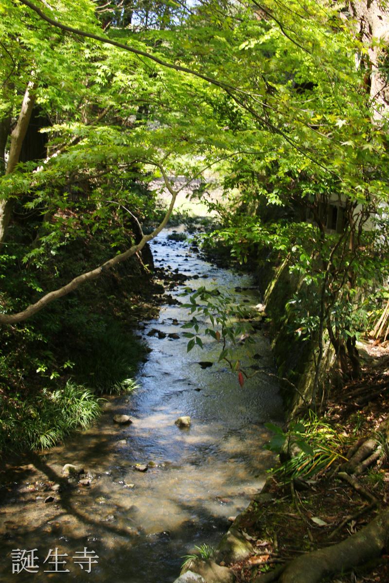 境内を横切る川