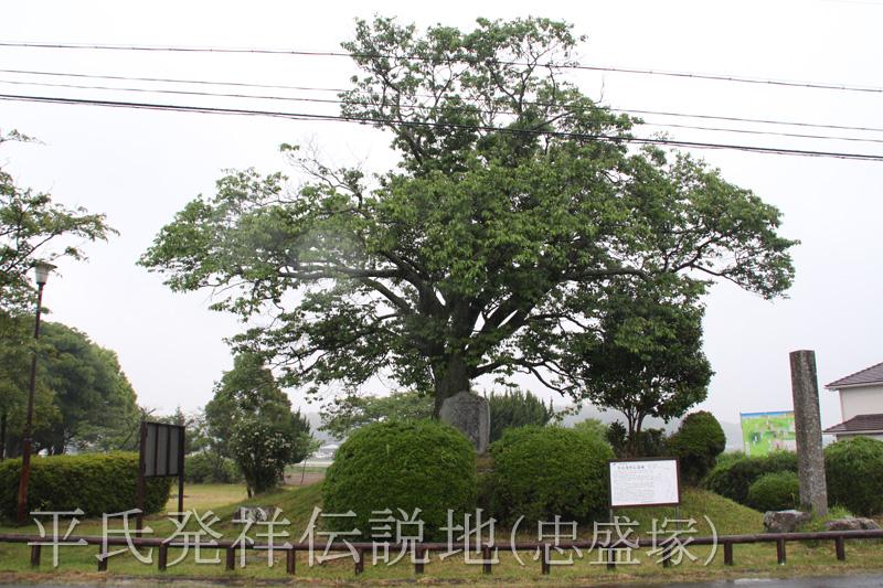 桜の木の下に碑