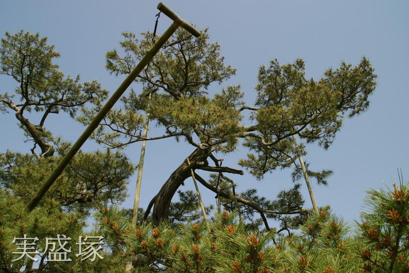 一部の枝が伐採されている