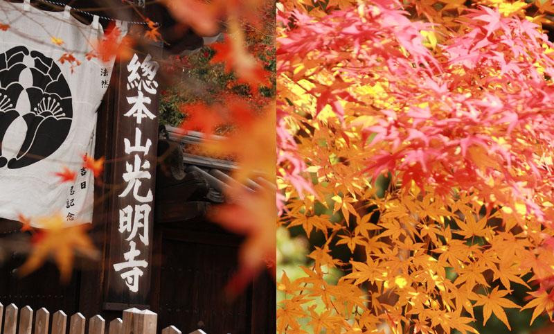 紅葉で有名な光明寺