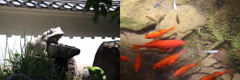金魚たちも