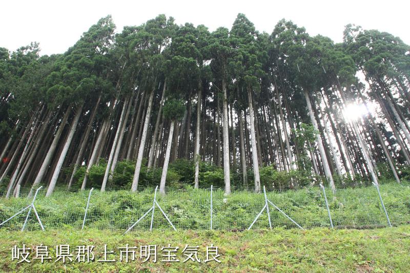 手入れされた木々