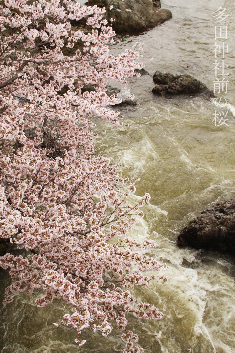 多田神社前の桜と川